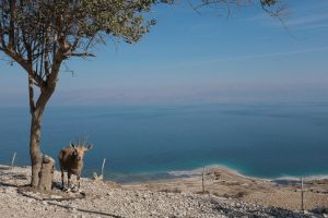 ים המלח. צילום: אילן אסייג