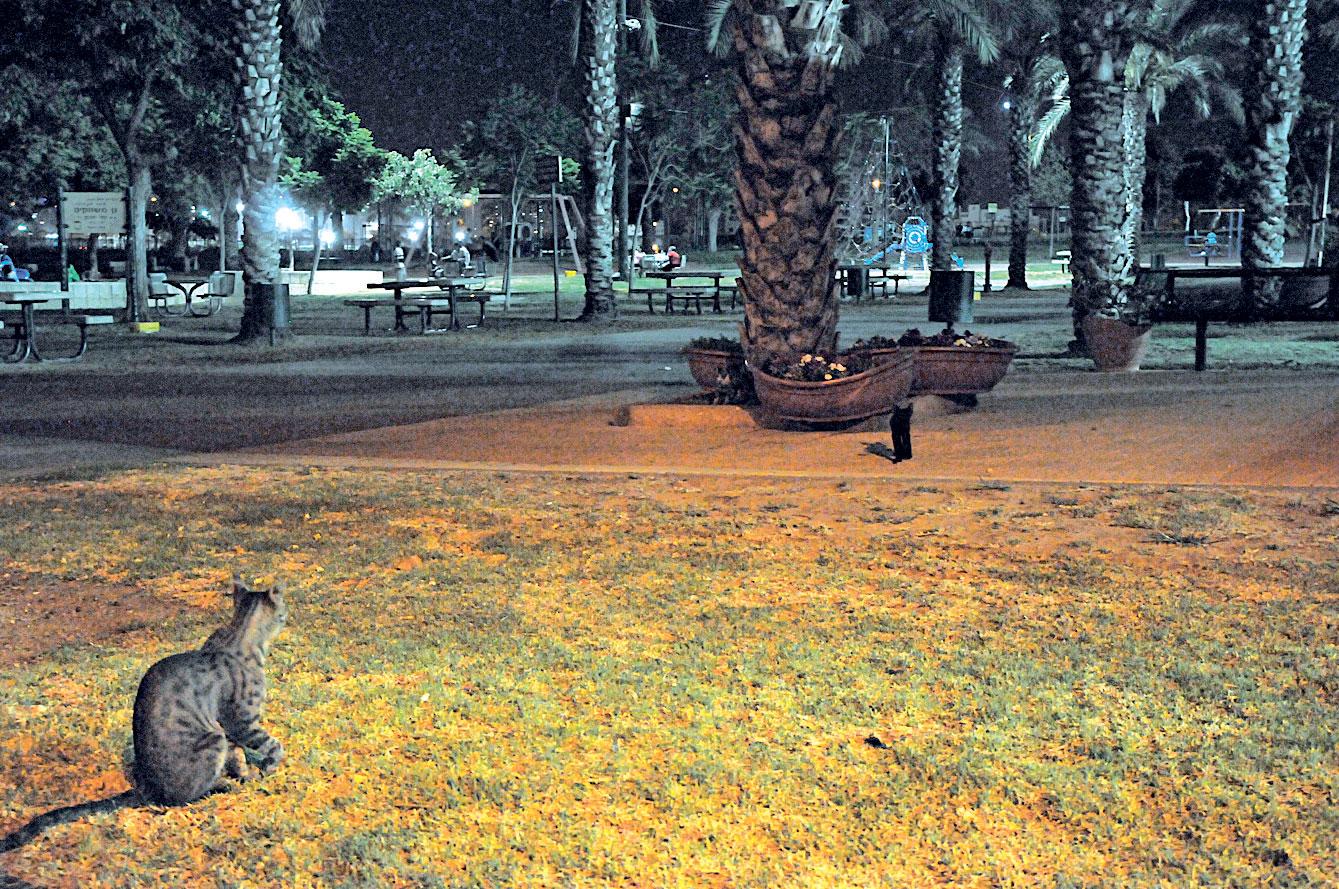 הפארק הגדול. צילום: זאב שטרן
