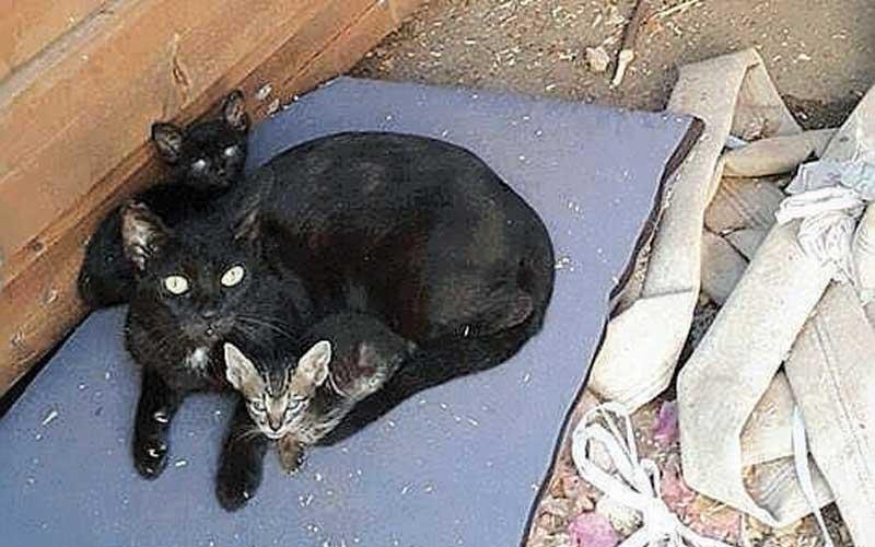 חתולים בחצר האחורית של בית הספר הוברמן בפתח תקווה