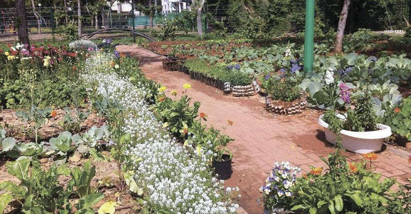 הגינה הקהילתית בשכונת עין גנים. צילום מזל טלבי לוי