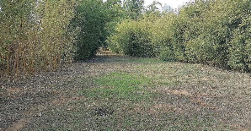 השטח עליו מבקשים התושבים להקים את הגינה בכפר גנים. צילום דורון קורן