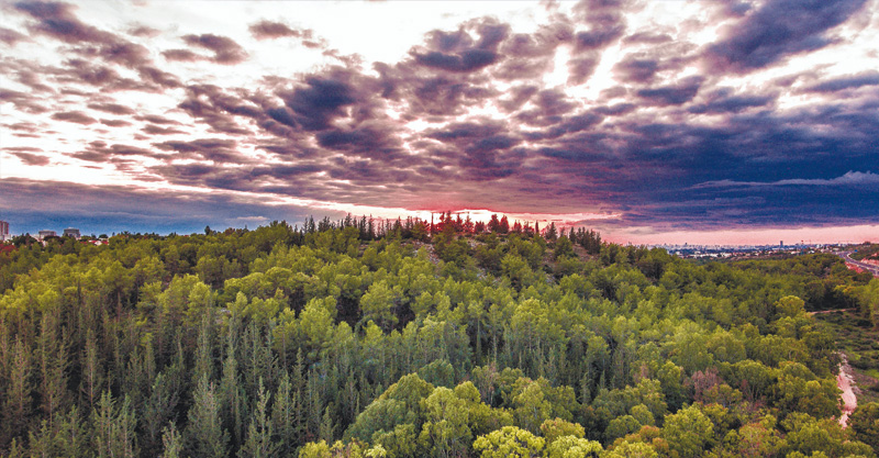 """""""תמונה מעל צמרות העצים של יער ראש העין, עם עוד אחת מהשקיעות המדהימות של תחילת החורף"""". צילום אילן שתיוי"""