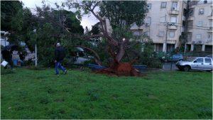 עץ קרס הבוקר ברחוב אדם יקותיאל כתוצאה מהרוחות החזקות.