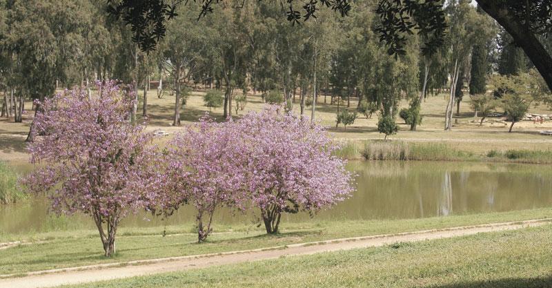 פארק מקורות הירקון. צילום משה גלעד