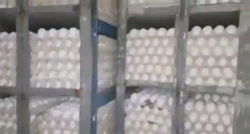 תפיסת הביצים המוברחות. צילום באדיבות מועצת הלול