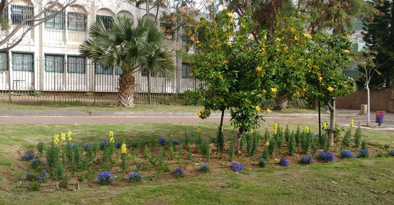 קיצוץ תקציב הגינון בשכונת צמרת גנים