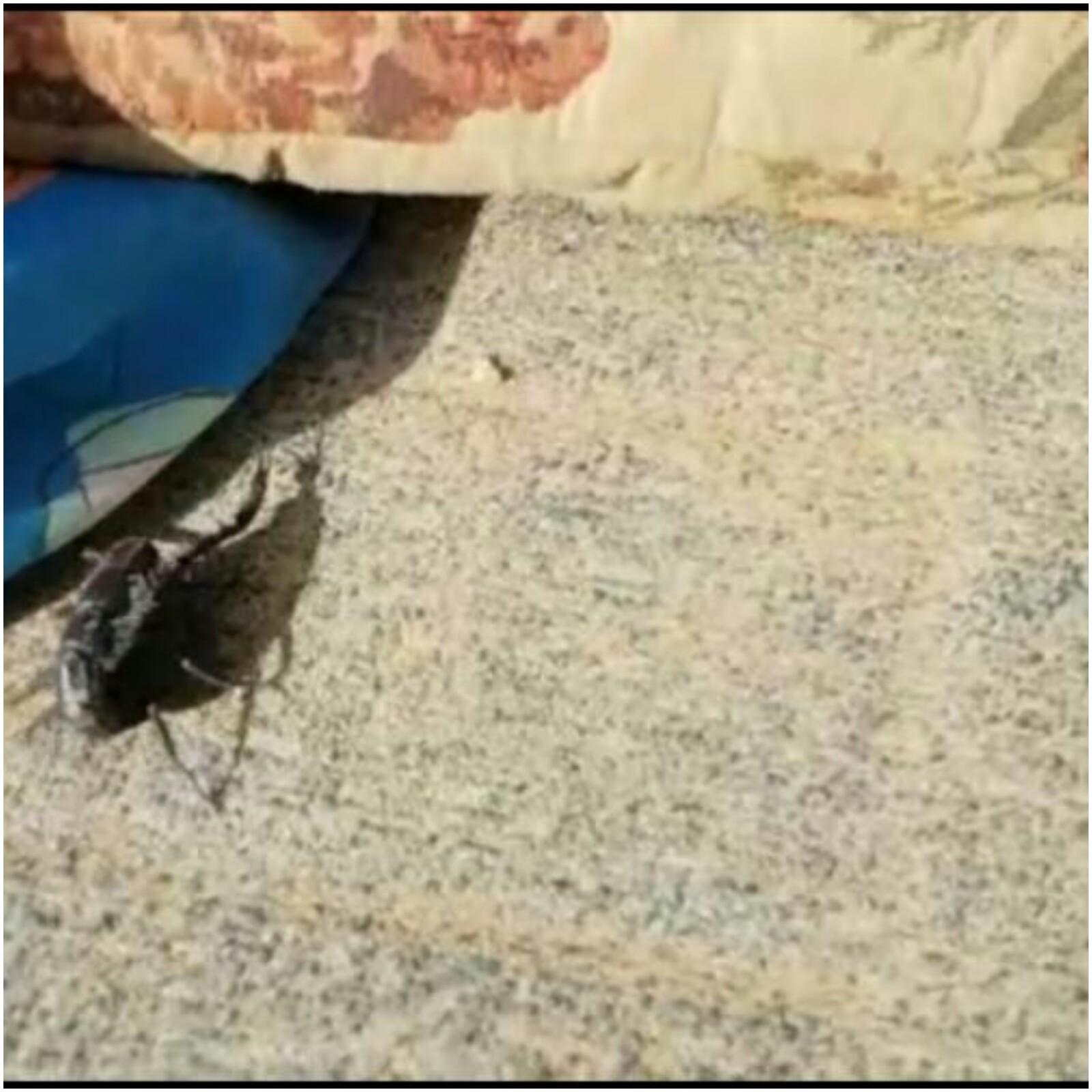 עקרבים באם המושבות צילום אלינור קשאני