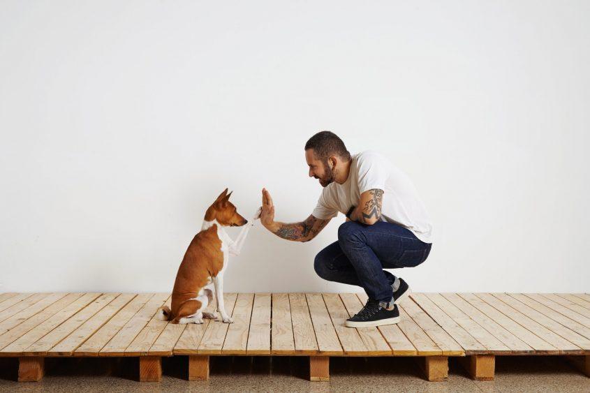 מאלפי כלבים במרכז ששווה להכיר (מאגר תמונות: Shutterstock)