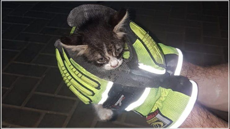 חילוץ חתול רחוב מוטה גור. צילום באדיבות הכבאות