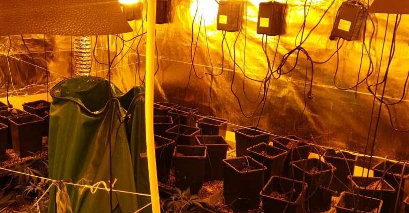 מעבדה לגידול סמים בפתח תקוה צילום משטרת ישראל