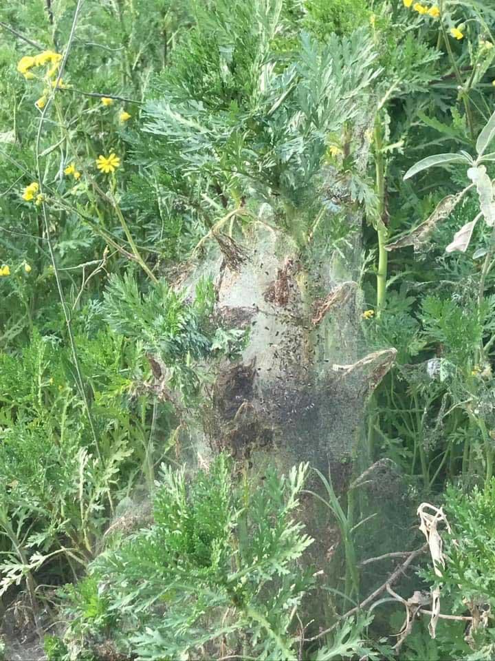 זחלים בנווה עוז. צילום באדיבות התושבים