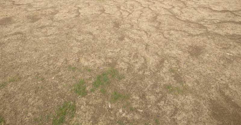 קצת דשא, הרבה חול. מגרש מספר 1 בסירקין