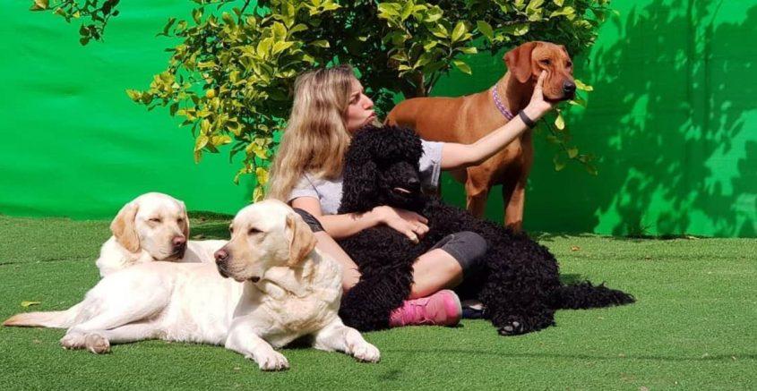 """סבקה אילוף כלבים ופנסיון - """"השקט שלכם כשהכלב איתנו"""""""