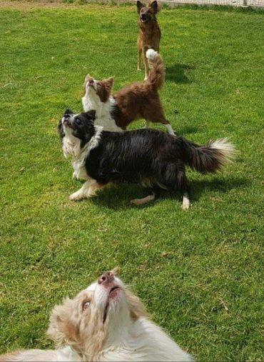 """""""כלבים בכפר"""" – גם לכלב שלכם מגיע לצאת לחופשה. צולם ע""""י צוות """"כלבים בכפר"""""""