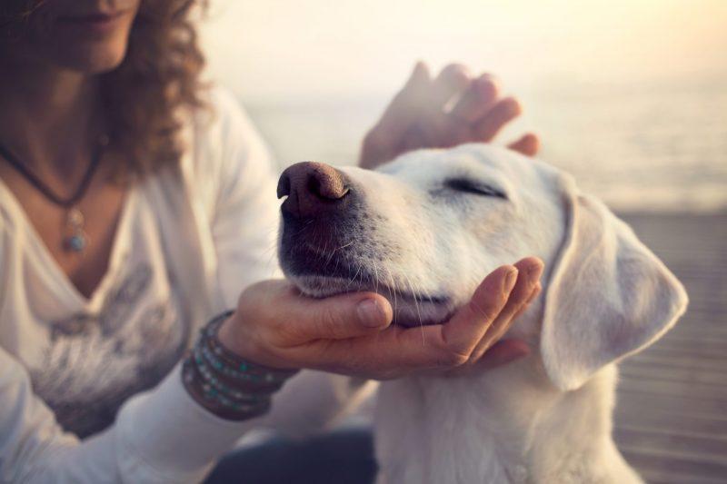 קייטנת כלבים במרכז. תמונה ממאגר Shutterstock