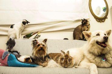 החיות של פדילה. צילום: אסיל עיראקי