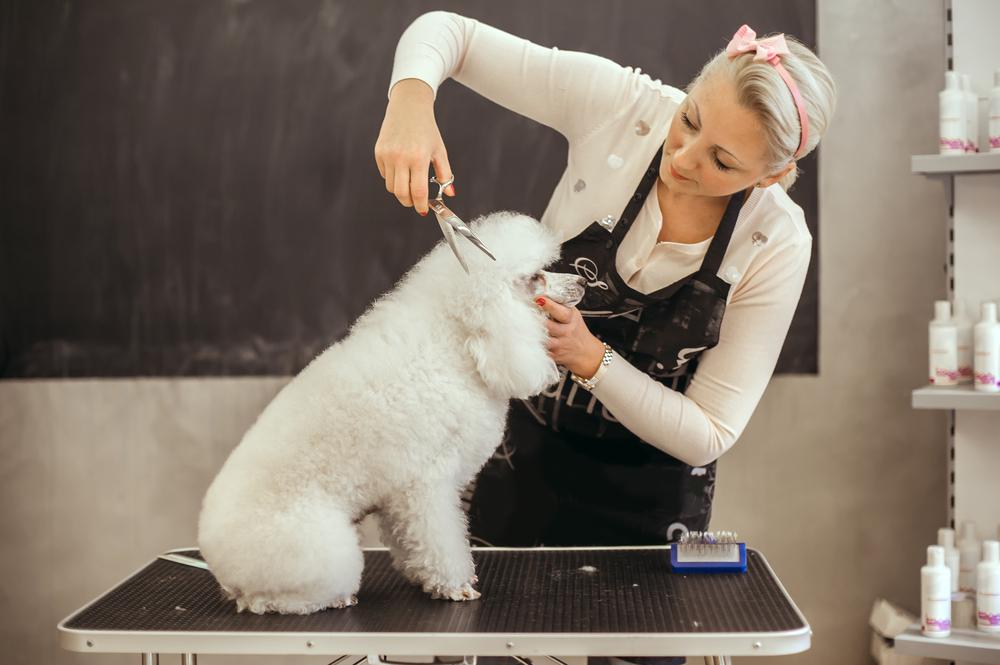 מספרה לכלבים בפתח תקוה. (Shutterstock) צילום: guruXOX
