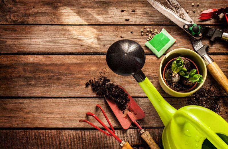 כלי גינון בפתח תקוה. תמונה ממאגר Shutterstock By Pinkyone