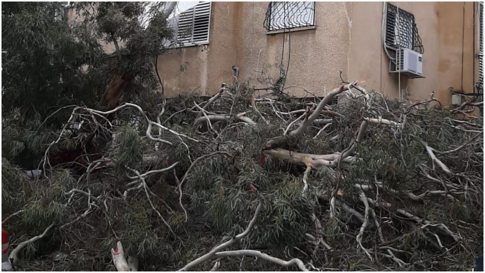 קריסת עץ ברחוב מונטיפיורי. צילום באדיבות הכבאות