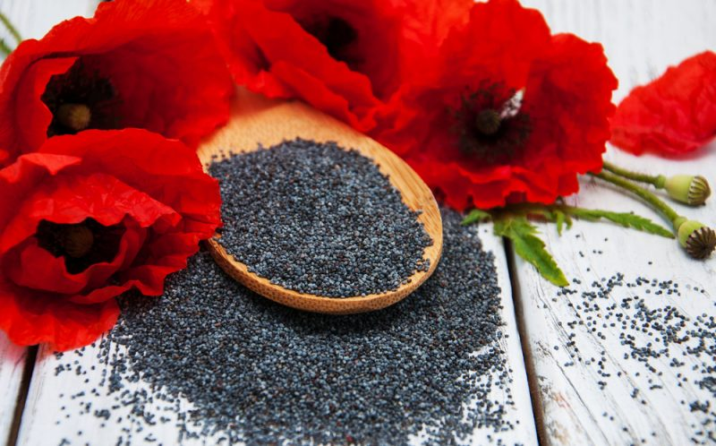 פרג – זרע קטן ומלא בריאות (צילום: By almaje, shutterstock)